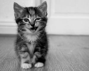 smile-kitten